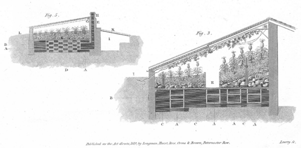 19th century drawing showing hothouse and pinery-vinery in section