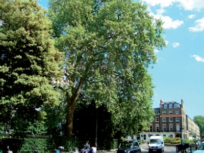 The west side of russell square london facing due south all photos