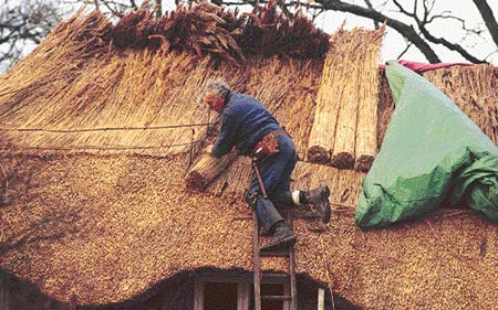 Thatch In The 21st Century